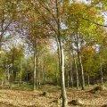 La forêt, source de bien-être