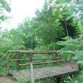 Arboretum de Montaubion-Chardonney